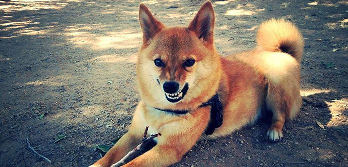 7 cosas que odian los perros