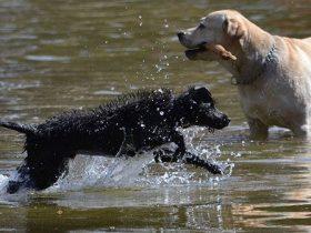 Consejos para cuidar a nuestro perro en verano