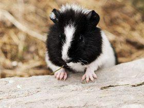 Cual es la temperatura ideal para un hamster