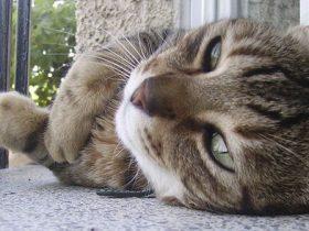 Cómo evitar y actuar ante un golpe de calor en un gato