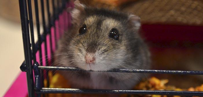 Cómo-evitar-que-el-hamster-muerda-su-jaula