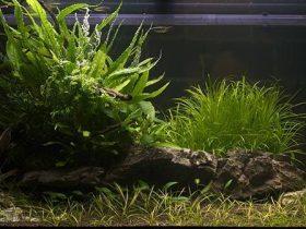 Cómo-tener-un-acuario-más-bonito
