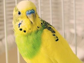 Consejos-para-mantener-una-buena-higiene-en-las-aves