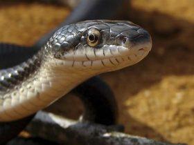 Consejos-para-tener-serpientes-como-mascota