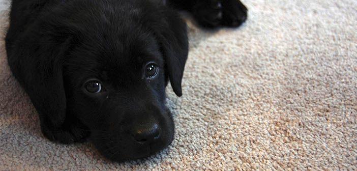 Qué-necesito-antes-de-tener-un-perro
