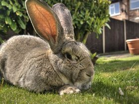 conejos-como-mascota-ventajas-e-inconvenientes