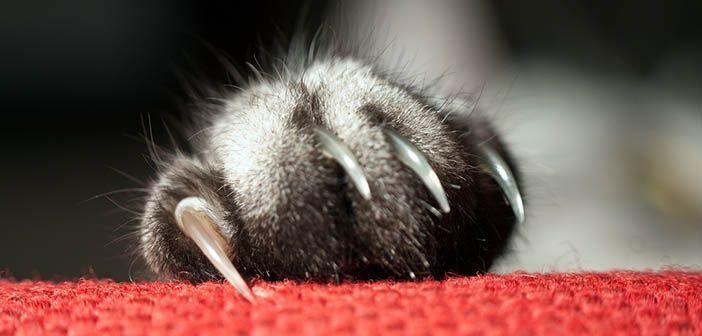 Cómo cortar las uñas a tu gato