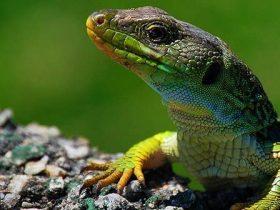 elementos-imprescindibles-para-tener-reptiles-en-casa