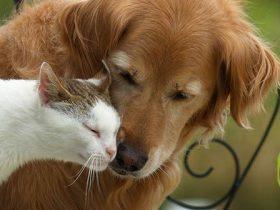Protege a tu perro o gato de la artrosis con Flexadin