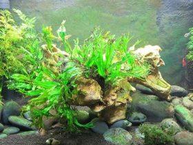 cómo-debe-ser-el-agua-de-mi-acuario-o-pecera