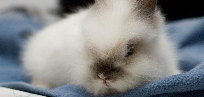 como-puedo-cepillar-el-pelo-a-mi-conejo