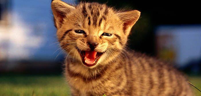 cuidados-basicos-para-que-nuestro-gato-sea-feliz-hobby-mascotas