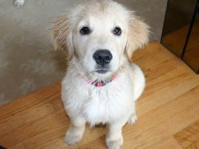 hobby-mascotas-trucos-para-que-tu-perro-siga-tus-ordenes