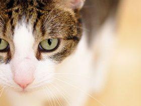 11-cosas-que-sólo-entenderán-las-personas-que-tengan-gatos-hobby-mascotas