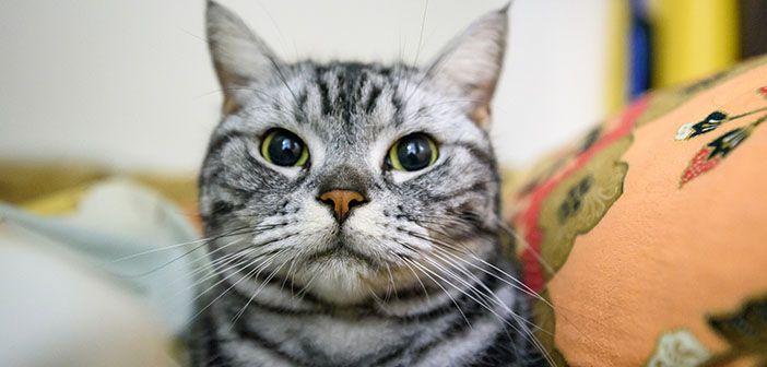 7-cosas-que-odian-los-gatos-hobby-mascotas