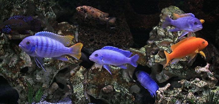 Puedo-usar-piedras-de-la-naturaleza-en-mi-acuario-hobby-mascotas