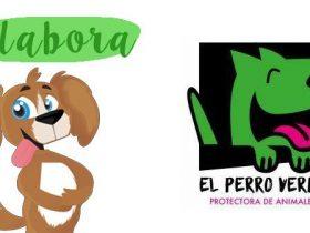 colabora-con-el-perro-verde-hobby-mascotas