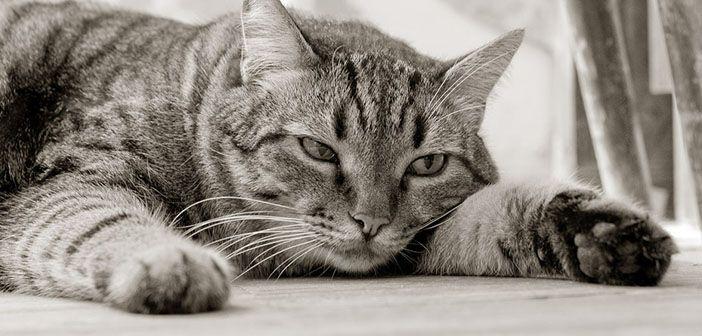 que-puedo-hacer-si-mi-gato-esta-triste-hobby-mascotas