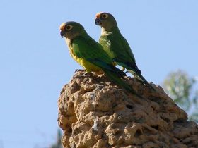 por-que-las-aves-no-son-mascotas-para-todo-el-mundo-hobby-mascotas