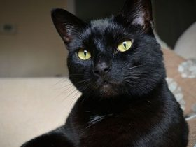 5-cosas-fascinantes-sobre-los-gatos-negros-hobby-mascotas