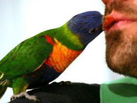 los-pajaros-pueden-ser-mas-dociles-con-alguien-dependiendo-de-si-es-hombre-o-mujer-hobby-mascotas