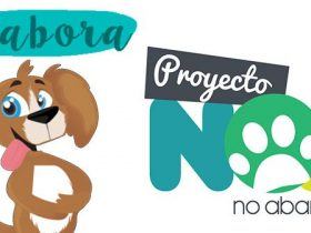 colabora-con-proyecto-noa-hobby-mascotas