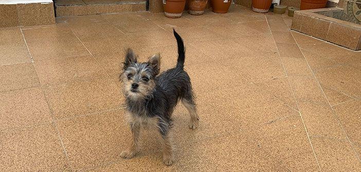 hobby-mascotas-como-preparar-tu-casa-para-tener-un-cachorro