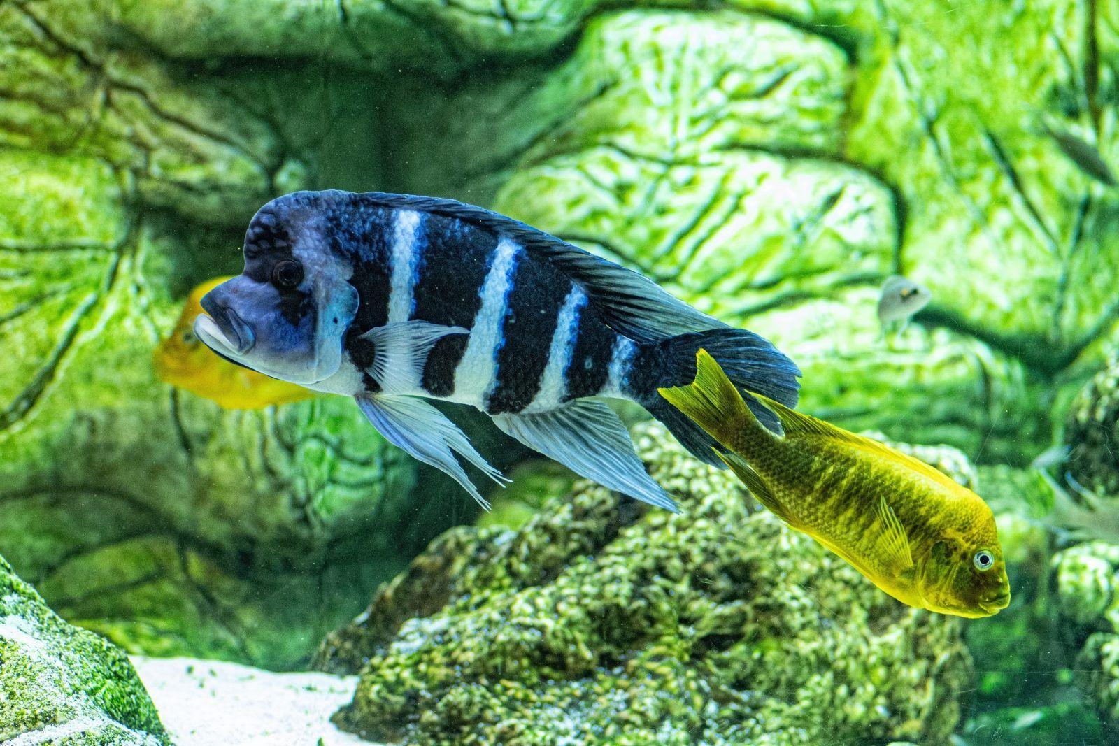 evitar-que-aparezcan-las-enfermedades-de-nuestros-peces-hobby-mascotas